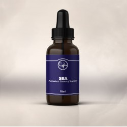 Katabatic Sea Essence (10ml)