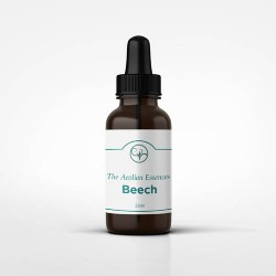 Beech Essence (25ml)